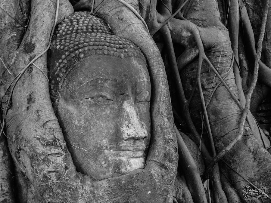 La Célèbre Tête Enracinée Du Wat Maha That à Ayutthauya