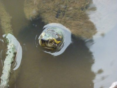 Notre copine la tortue !