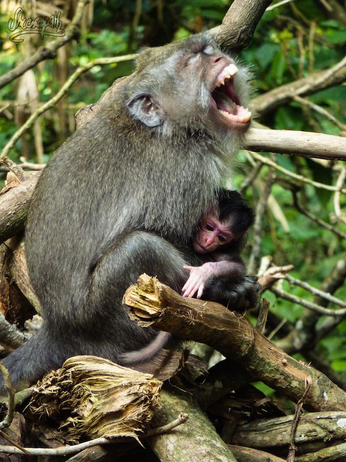 Dur D'être Une Maman, Même Pour Un Singe !