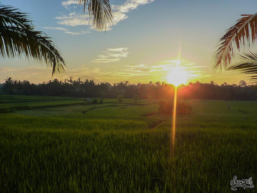Le lever du soleil sur les rizière
