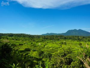 Les rizières sur la route de Tulamben, surement les plus belles de Bali