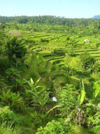 Les rizières sur la route de Tulamben