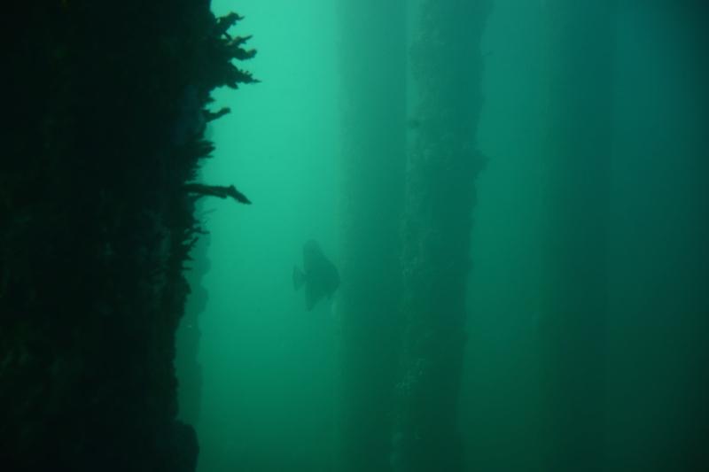 Dans l'observatoire sous marin, il a pas voulu venir plus près le gros pépère !!!