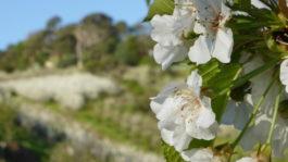 La ferme de cerises de nos amis à Adelaide (Photo par Mariette)