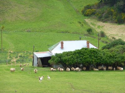 Les Moutons De Joe