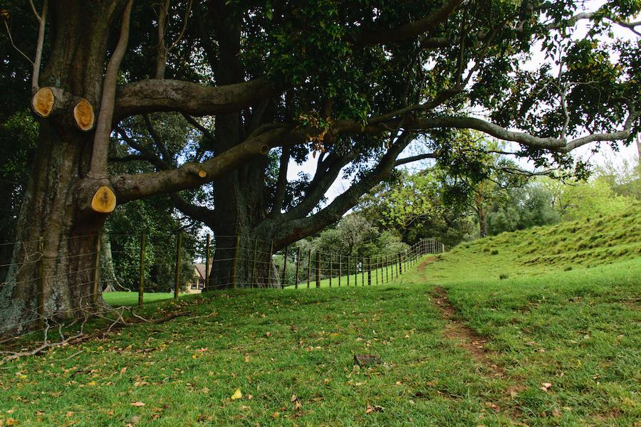 Au pied de One Tree Hill