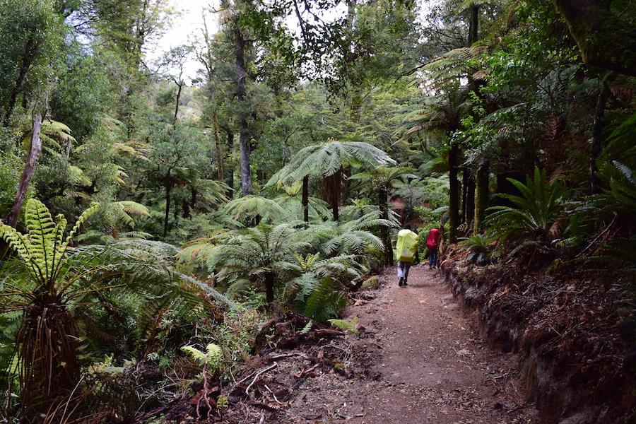 Dans la forêt tropiacale