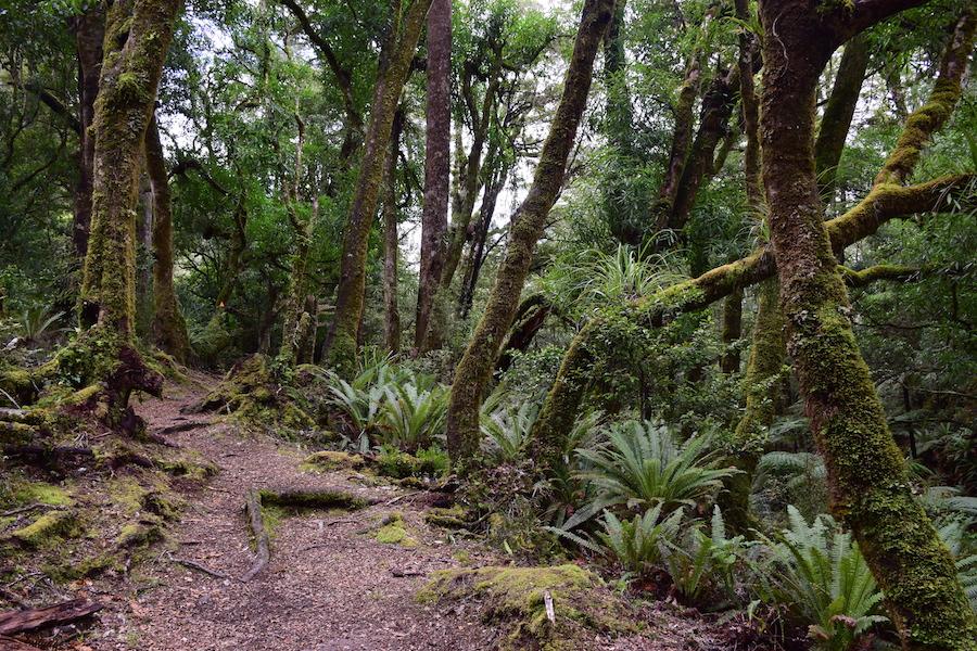 La piste dans la forêt tropicale