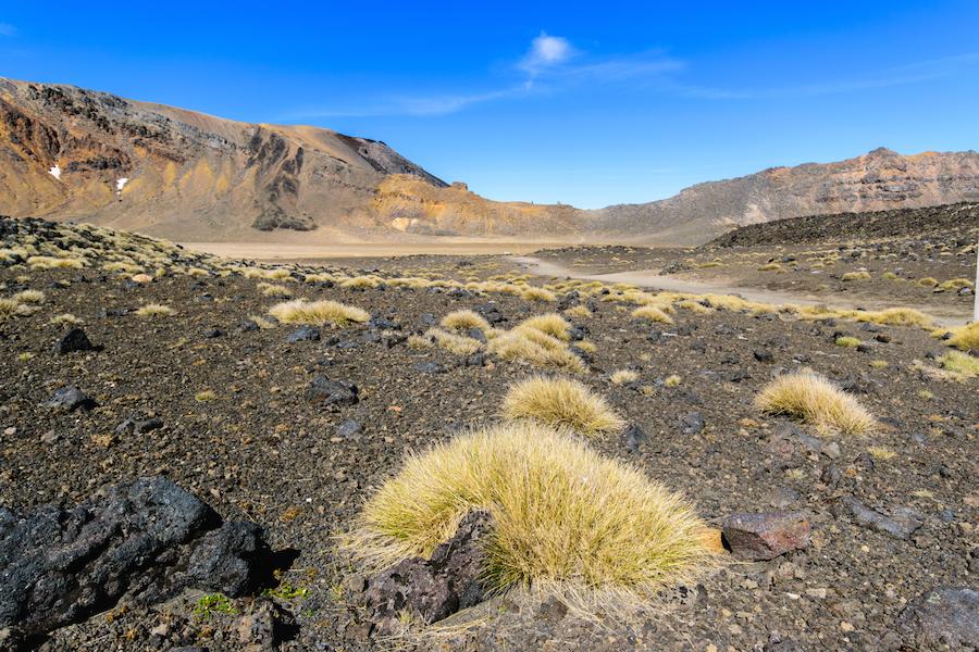 Les touffes de Tussack donant un petit air de désert aride