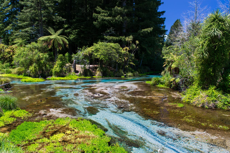 La rivière de Hamurana Springs