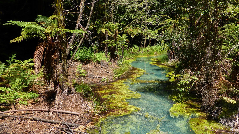 Rivière volcanique de la Redwoods Forest