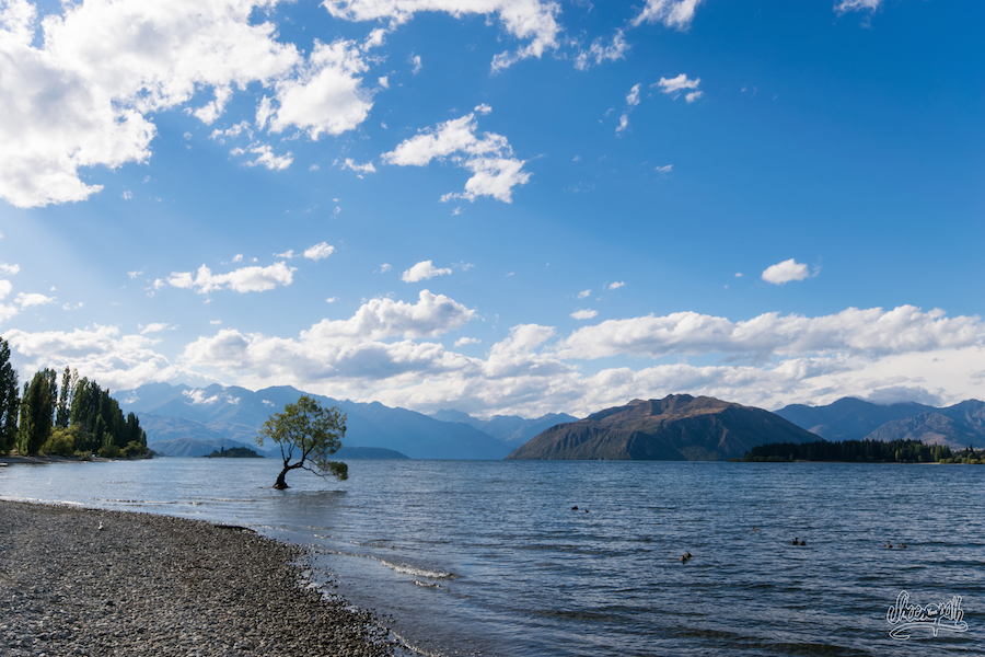 Lake Wanaka Et Son Lonely Tree, L'arbre Le Plus Photographié De Nouvelle-Zélande
