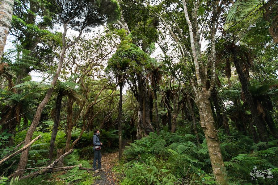Balade Dans Une Forêt Ancestrale Non Loin De Notre Camping