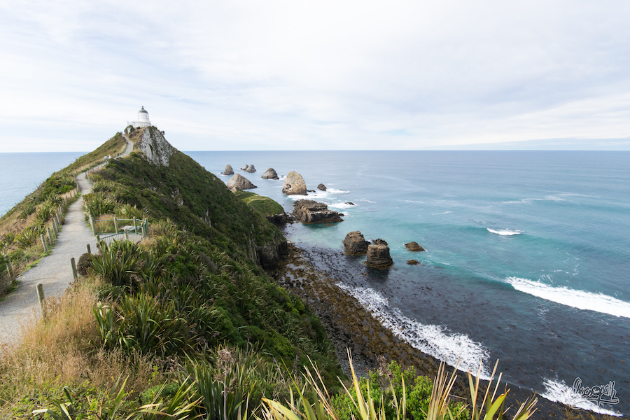 Sur le chemin du phare de Nugget Point