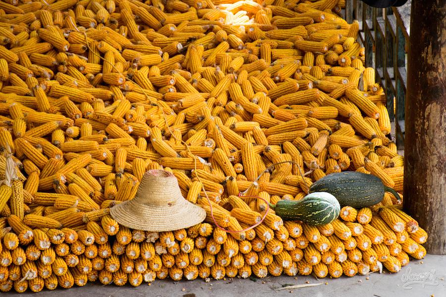 Dans Les Fermes De Cizhong, On Fait Sécher Le Maïs... (Photo Par Mariette)