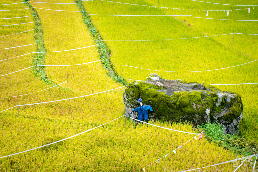 Les Rizières En Terrasse De Cizhong (Photo Par Mariette)