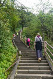 Voilà ce qu'il faudra gravir ou descendre pendant 50km sur la montagne d'Emeishan !