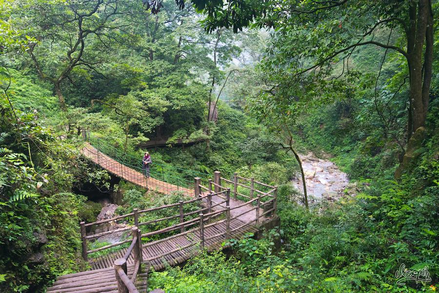 Dans La Forêt Aux Singes Sur Les Pontons Tout En Faux Bois Bien Casse Gueule. Juste Avant L'arrivée Des Bus De Touristes.