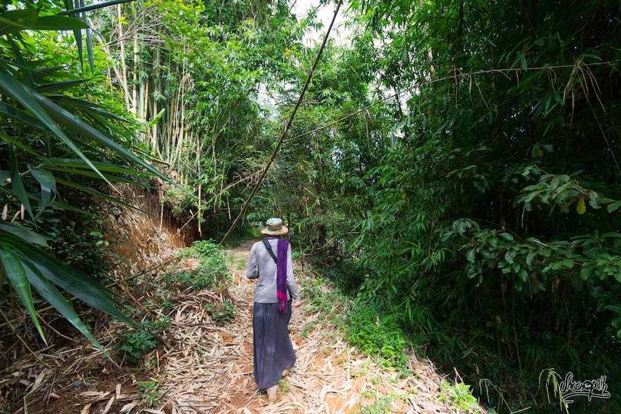 31- En Pleine Jungle Durant Le Trek Sur Nan Nuo Shan Au Xishuangbanna