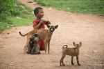 Enfants Et Chiots, Populations Majoritaires Au Laos
