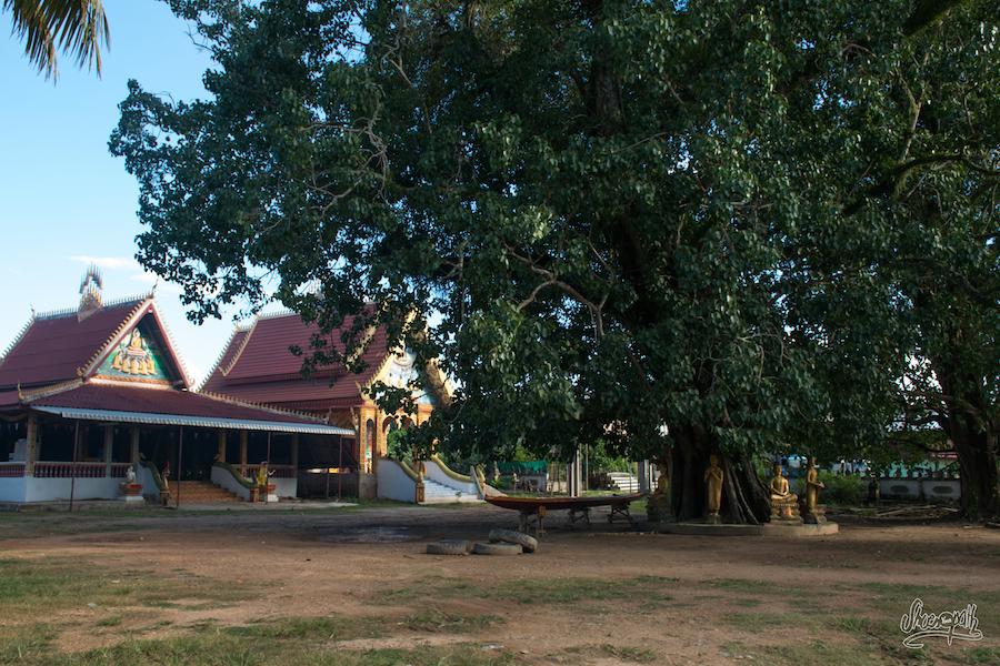Notre meilleur terrain de camping de ces 4 derniers mois ! Avec vue sur le Mékong svp !