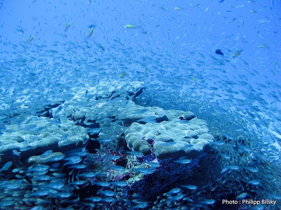 Récit De Corail Dans Les Similan Islands