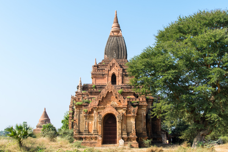 Vieilles pagodes et gros arbres dans la plaine de Bagan