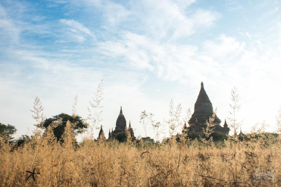 Bagan des champs