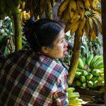La Petite Vendeuse De Bananes