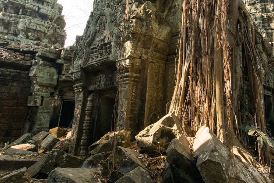Vieilles Ruines Prisonières De La Nature à Ta Prohm