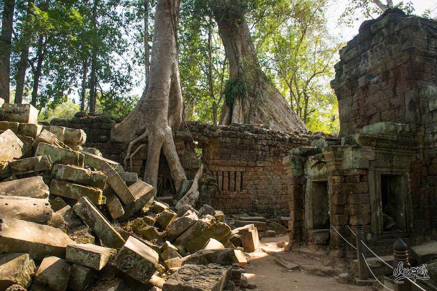 Ruines, Racines, Et Murs Survivants à Ta Prohm