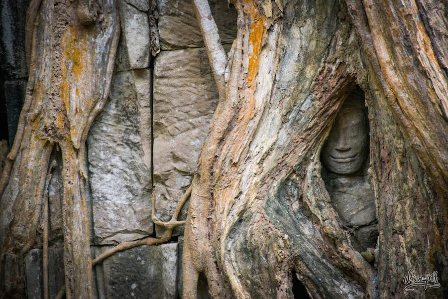 Toute Petite Tête De Bouddha Prisonière Des Racines à Ta Prohm