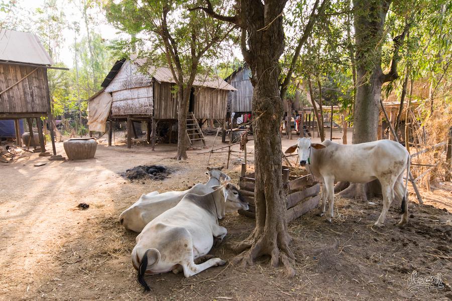 Scène de vie des bords du Mékong
