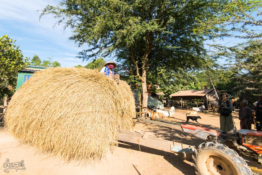 Sur les bords du Mékong, vie rurale.