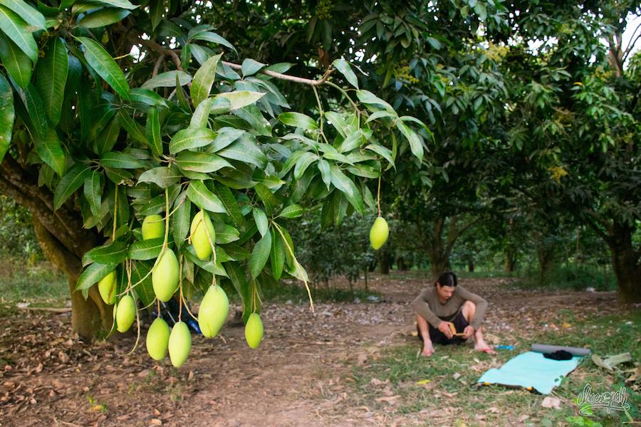 Campement Sous Les Manguiers