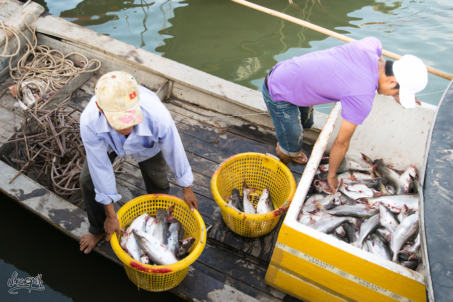 Pêche Du Jour à Dinh Van