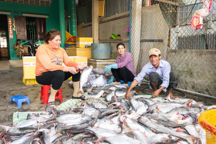 Tri de la pêche à Dinh Van