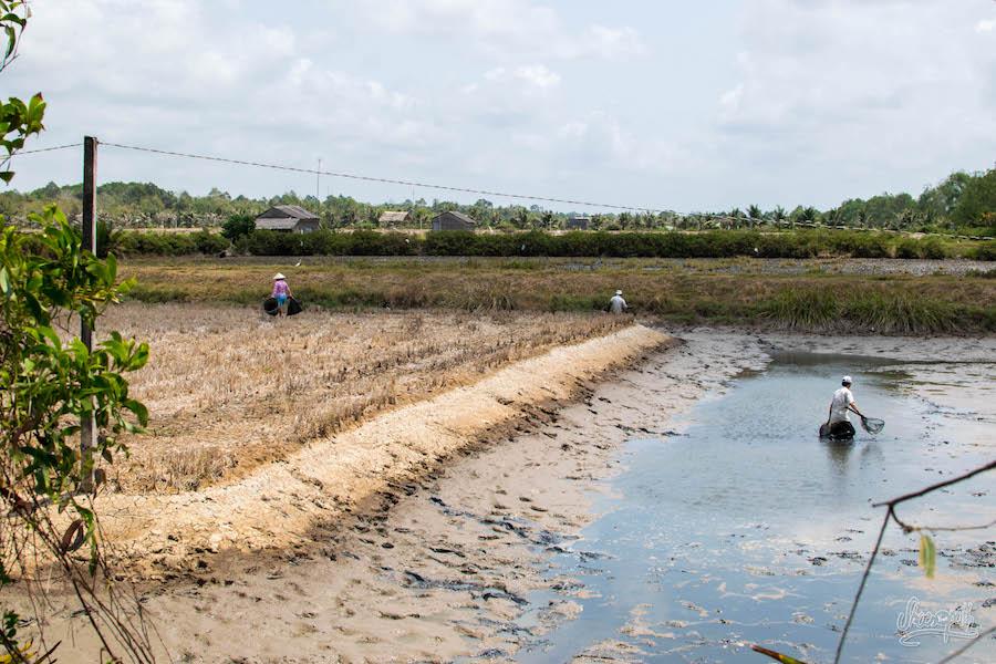 Nettoyage d'un bassin d'élevage de crevettes