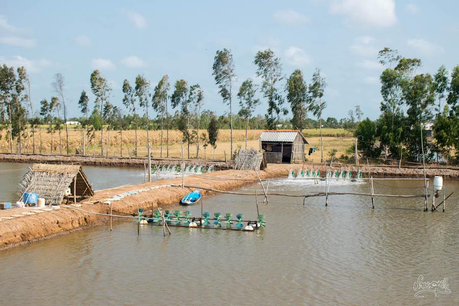 Bassin D'élevage De Crevettes