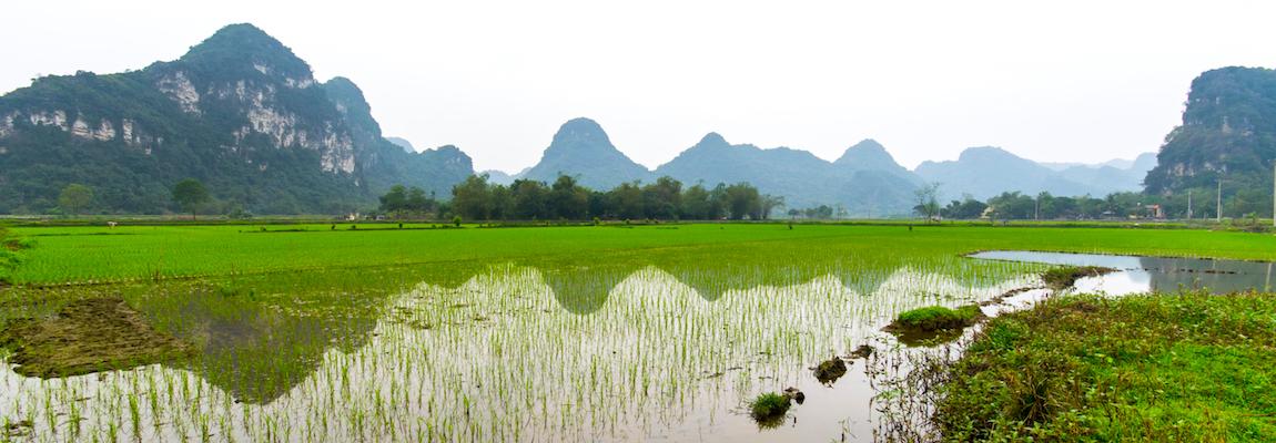 Vietnam - Ninh Binh, la baie d'Halong terrestre, dans le brouillard