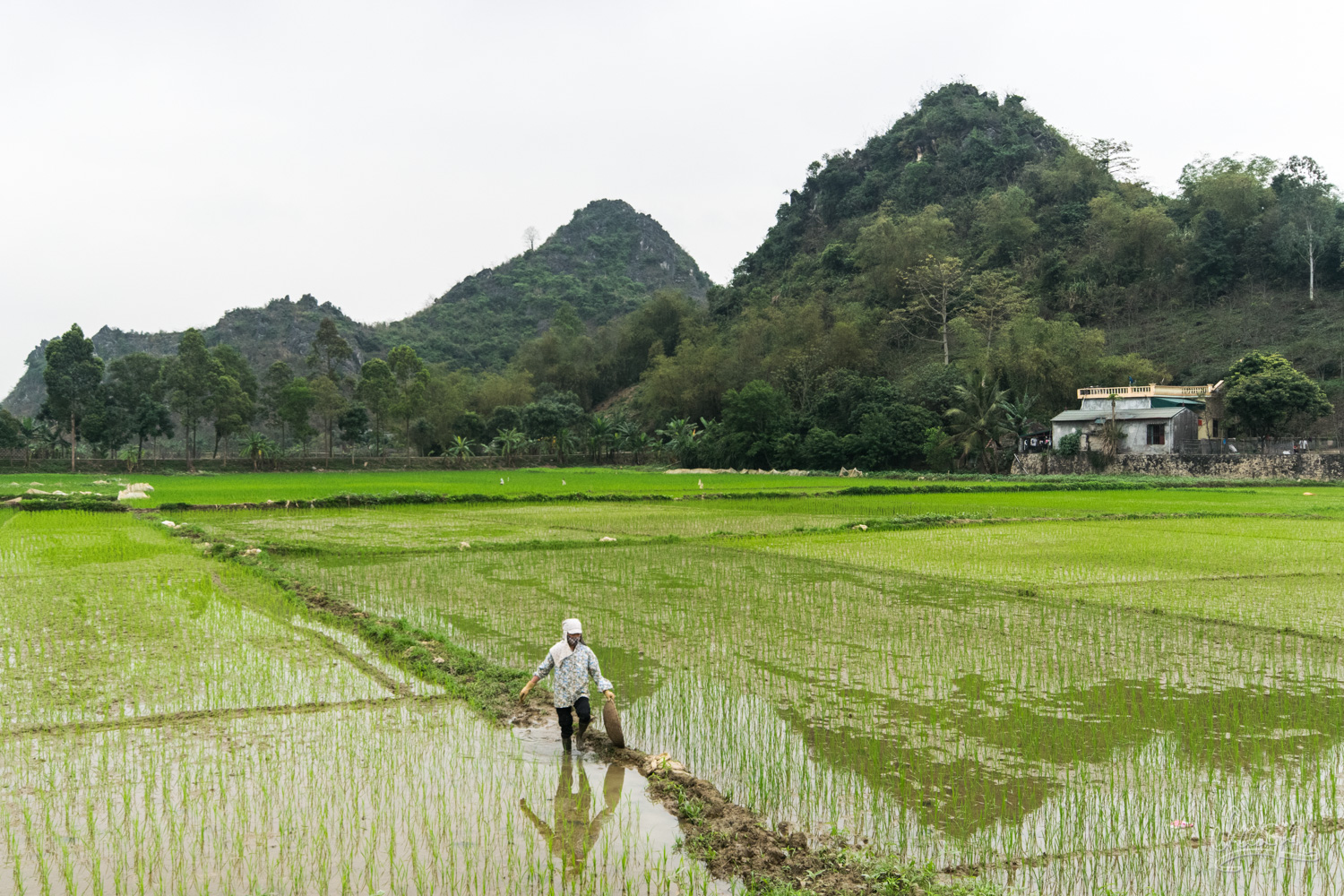 Ricefields in Ninh Binh