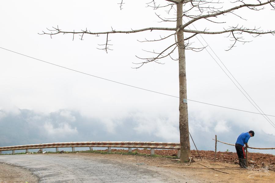Quelque part sur la route, un arbre pousse au bord du vide