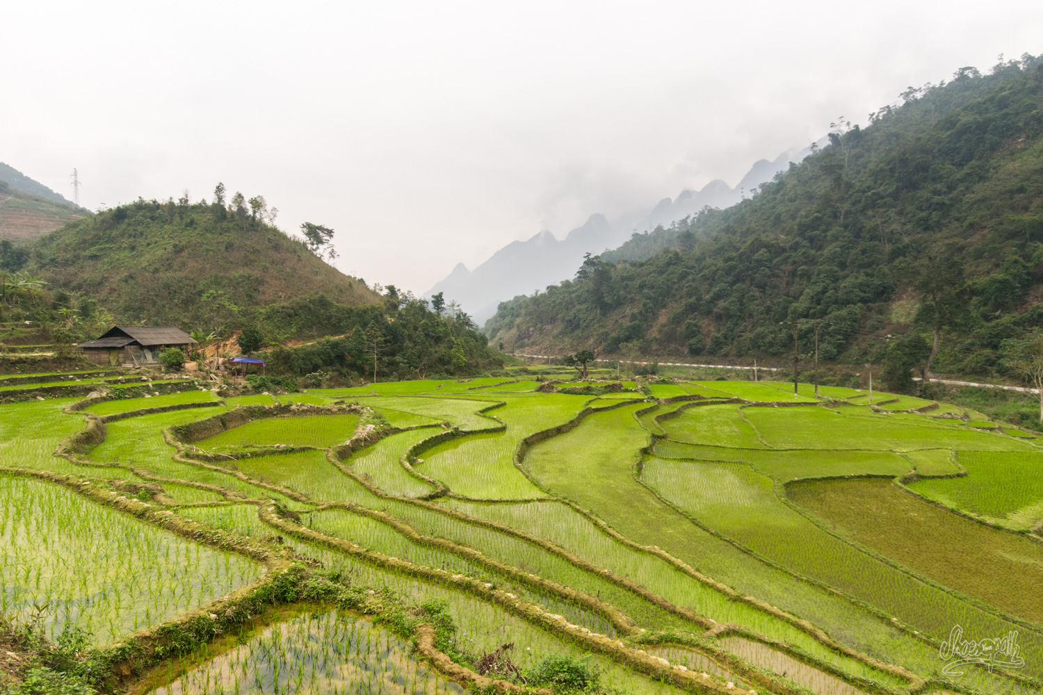 Ricefields in Ha Giang region. Not too bad, eh ?