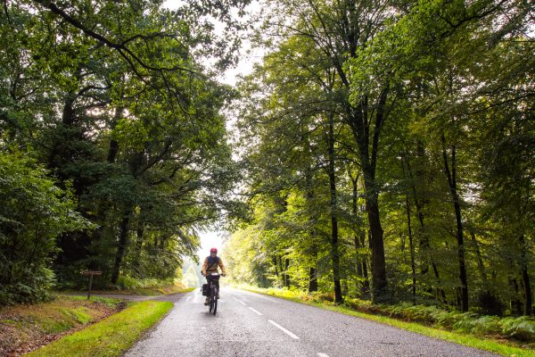 A Vélo Dans La Forêt Des Andaines
