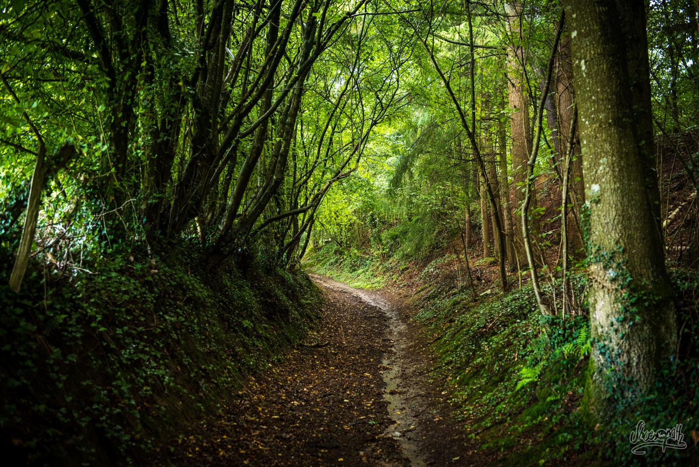 Promenade dans les forêts du Tertre Saint-Anne à Domfront