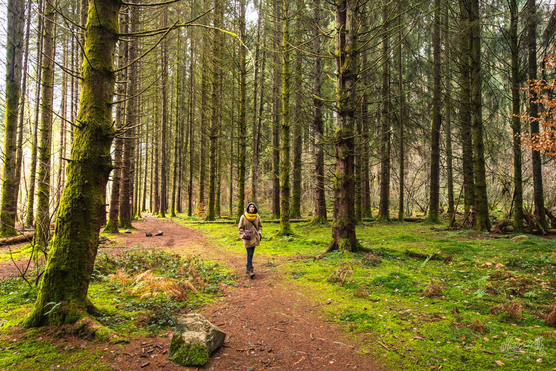 Dans les forêts du Morvan, non loin du Saut du Gouloux