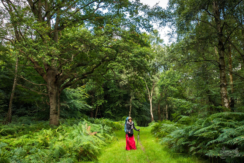 Dans la Ashdown Forest
