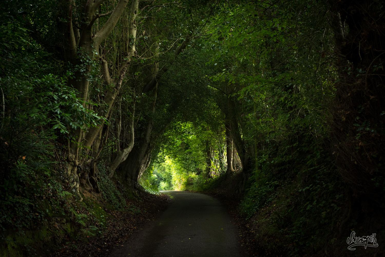 Dans les tunnels d'arbres qui nous abritent de la pluie
