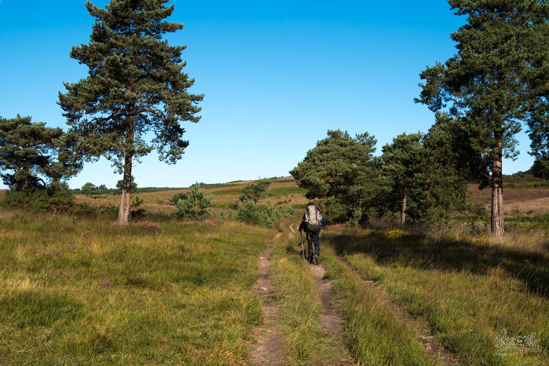 La lande de la Ashdown Forest.