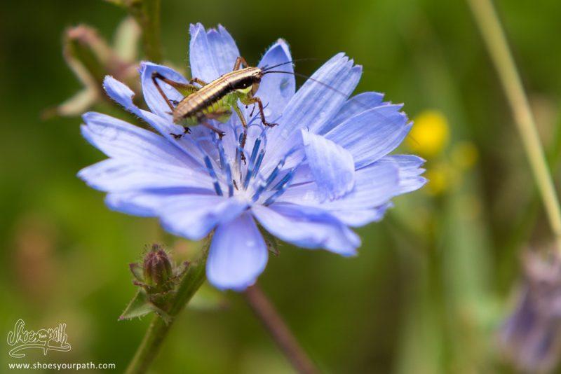 Insectes Et Fleurs, L'incroyable Biodiversité Des Balkans